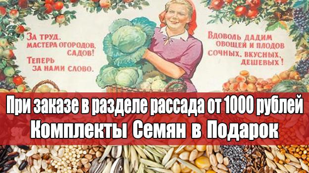 Овощная и цветочная рассада