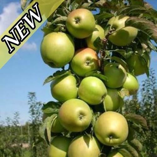 Яблоня Малюха