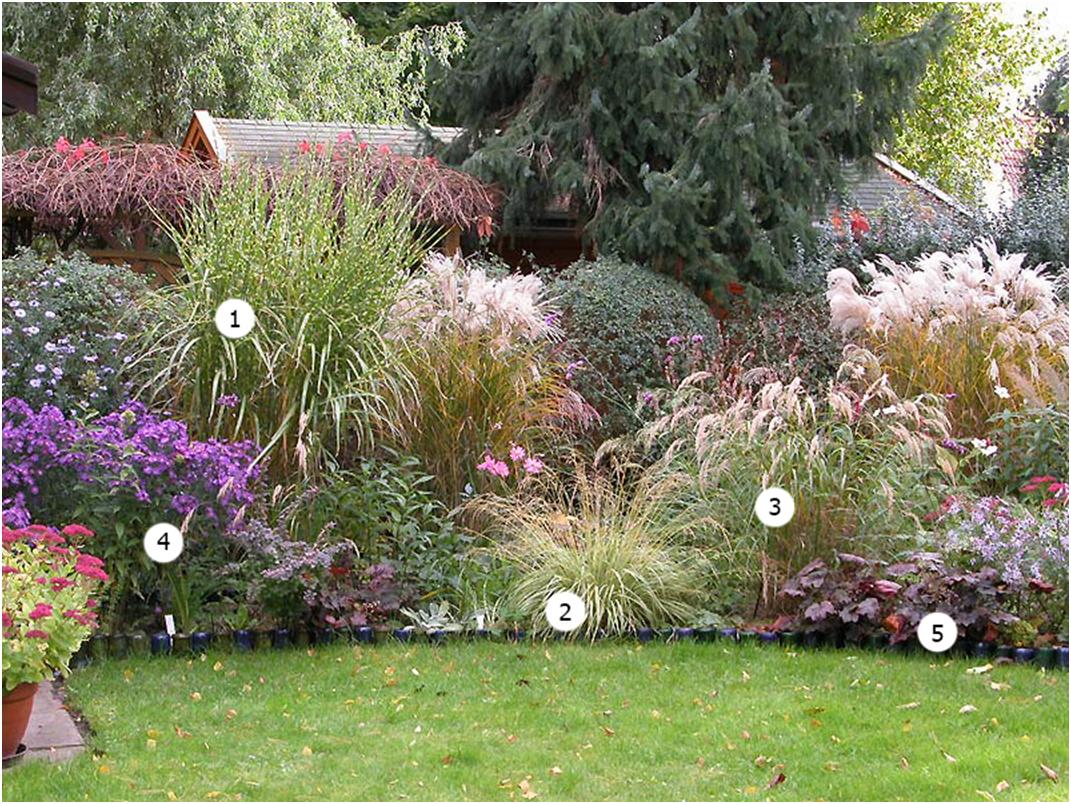 Растения в дизайне сада фото